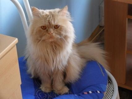 FOTKA - Garfielde, to maso na stole je zmrzlý!