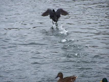 FOTKA - Mám chleba a utíkám po vodě