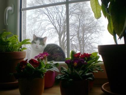 FOTKA - Nelly   kouka   ze střechy do kuchyně - 13.2.2010.