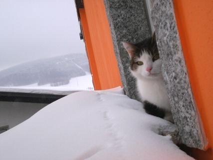 FOTKA - Nelly sedí venku na okně - 13.2.2010.