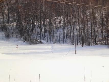 FOTKA - Pohled z okna na utíkajícího zajíce - 6.2.2010.