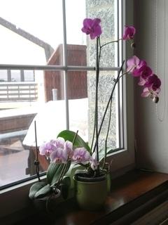 FOTKA - Moje dvě orchidee - 13.2.2010.