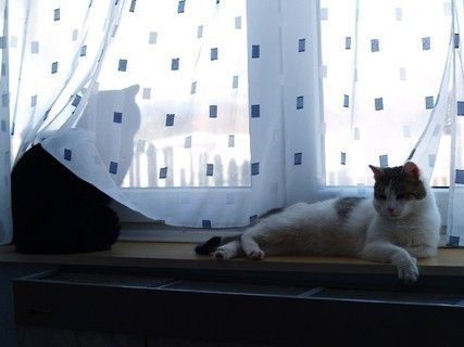 FOTKA - Moji dva kocou�i