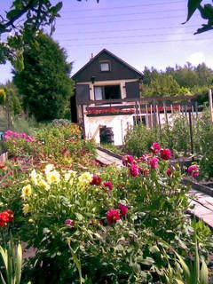 FOTKA - Léto na zahradě
