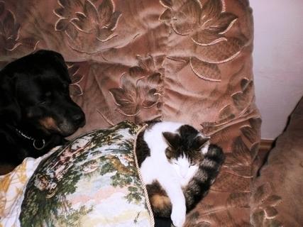 FOTKA - Roxy a Nelly na gauči - 16.2.2010.