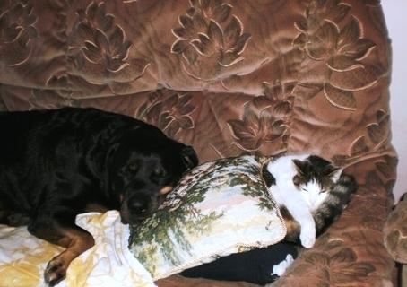 FOTKA - Nelly a Roxy spí na gauči - 16.2.2010