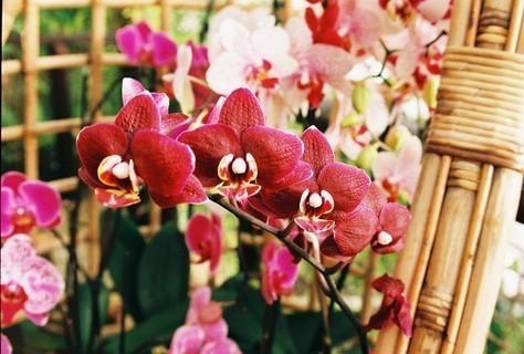 FOTKA - Orchidee v Botanické zahradě I.