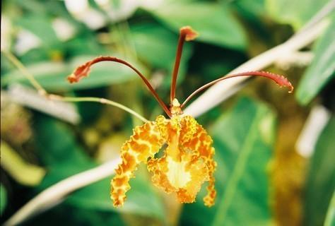 FOTKA - Orchidee v Botanické zahradě III.
