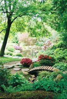 FOTKA - V japonské zahradě v pražské botanické zahradě