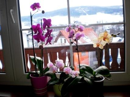 FOTKA - Už mám  4 orchidee/ dvě od manžela na Valentinky a 2  od tety jako dárek/.  - 20.2.2010.