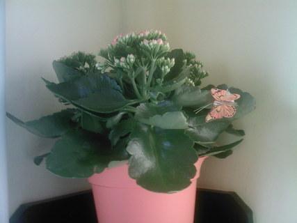 FOTKA - květina od mamky