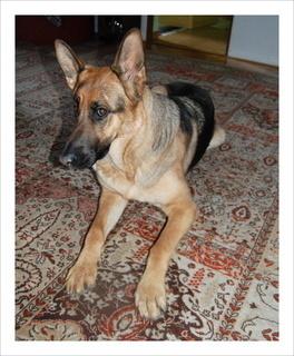 FOTKA - Pes, přítel člověka - PORTRÉT