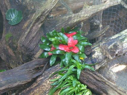 FOTKA - Lešná-kytka na dřevě