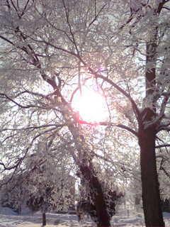 FOTKA - Zima II