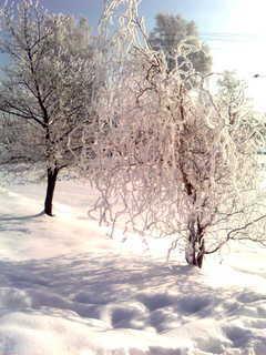 FOTKA - Zima III