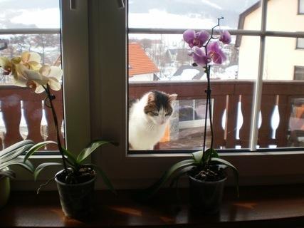 FOTKA - Nelly za balkonovým oknem - 23.2.2010.