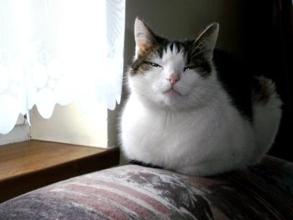FOTKA - Nelly odpočívá   na sedačce - 25.2.2010