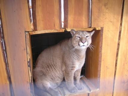 FOTKA - Kočička