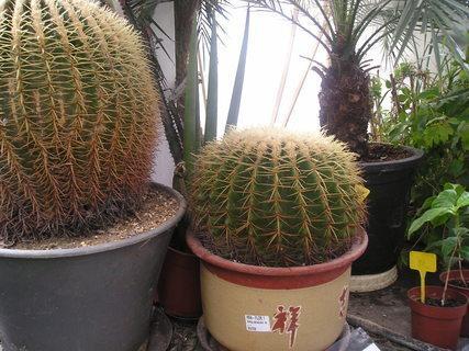 FOTKA - Kaktus.