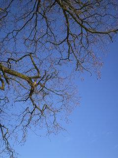 FOTKA - V koruně stromu