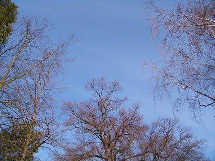 FOTKA - modroučká obloha jako na jaře...
