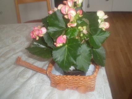 FOTKA - Vozíček na květináč