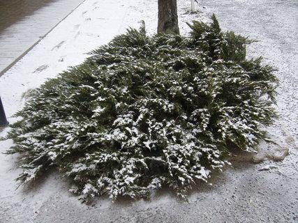 FOTKA - Sněžení se vrátilo