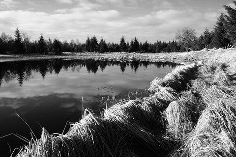 FOTKA - Černý rybník BW