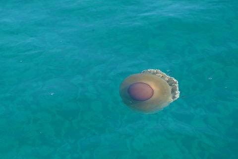 FOTKA - medůza