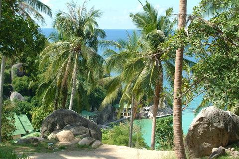 FOTKA - palmy