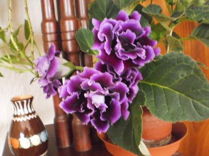 FOTKA - moje květy 1.