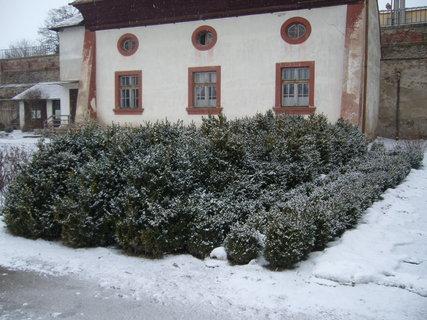 FOTKA - Zámecký park v Jaromkách.........