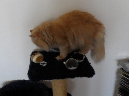 FOTKA - Myško, já tě vidím
