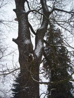 FOTKA - Zámecký park, J.n R.......