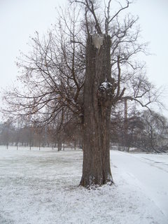 FOTKA - Zámecký park, J.n R....................