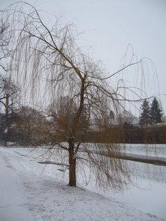 FOTKA - Zámecký park, J.n R.....................