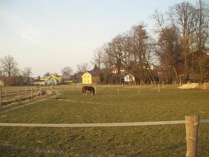 FOTKA - Kůň na louce