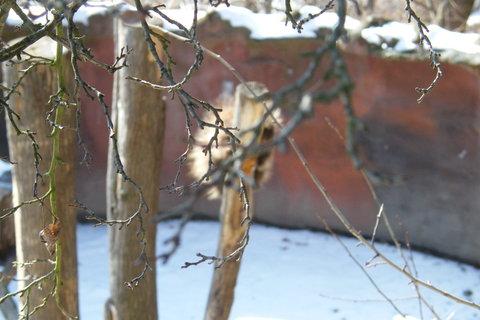 FOTKA - Větvičky stromu