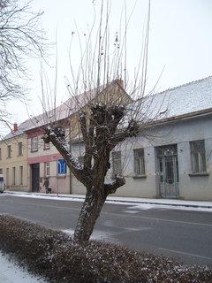 FOTKA - V zimě