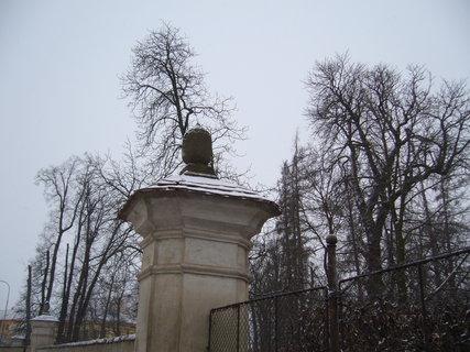 FOTKA - V zimě.