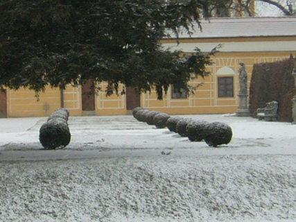 FOTKA - V zimě..
