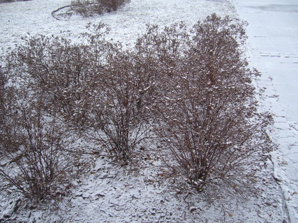 FOTKA - V zimě...
