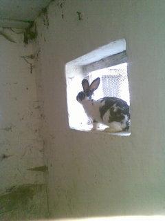 FOTKA - zvědavý králík