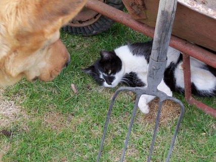FOTKA - Velký dohled nad malou kočkou