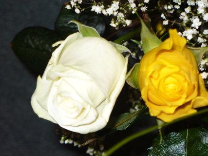 FOTKA - Žlutá a bílá růže