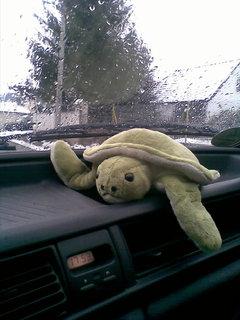 FOTKA - želva v autě