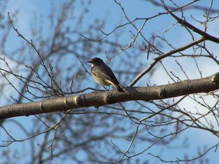 FOTKA - Z ptačí říše