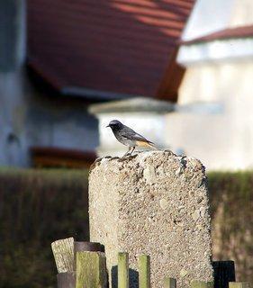 FOTKA - Z ptačí říše...