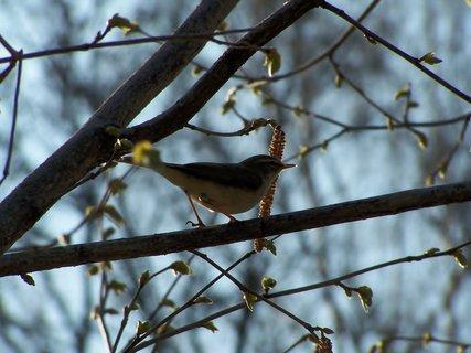 FOTKA - Z ptačí říše....