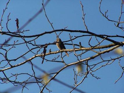 FOTKA - Z ptačí říše.....